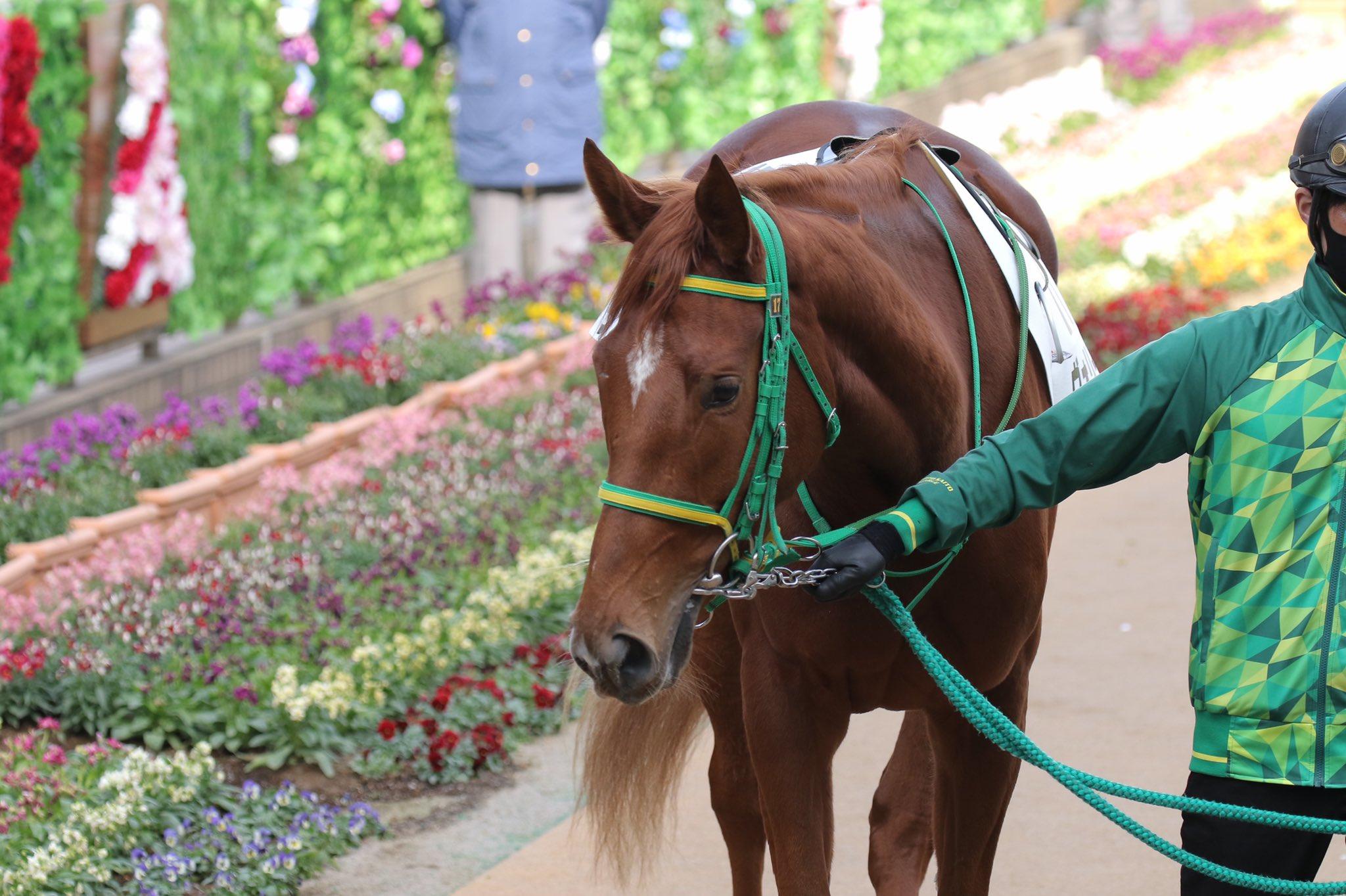 バヌーシ自慢の愛馬